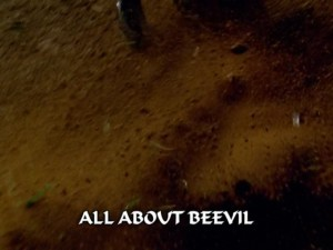 All About Beevil