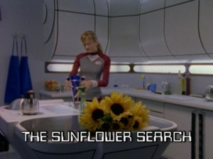 The Sunflower Search